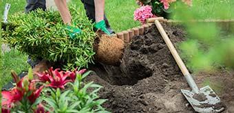 Gartenpflege aus ungarn